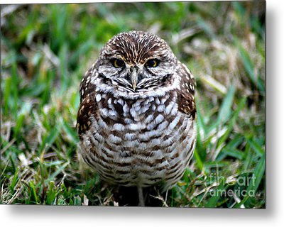 Metal Print featuring the photograph Owl. Best Photo by Oksana Semenchenko