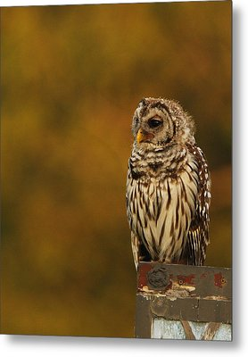 Owl On A Fence Metal Print