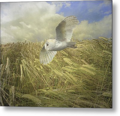 Metal Print featuring the photograph Owl On The Prowl by Roy  McPeak