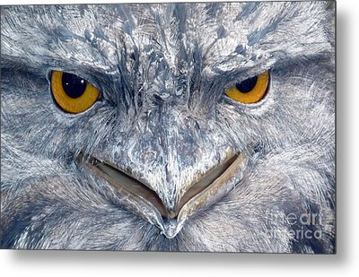Owl Metal Print by Sandro Rossi