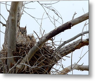 Owl Snuggle  Metal Print by Rebecca Adams