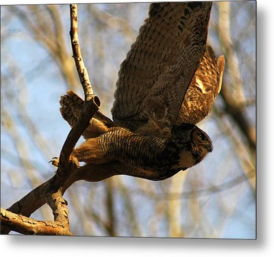 Owl Take Off Metal Print by Raymond Salani III