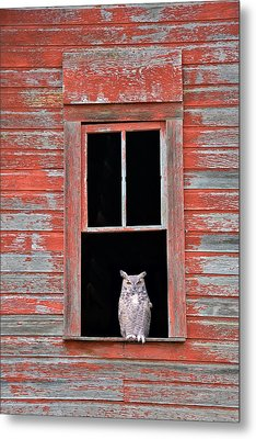 Owl Window Metal Print by Leland D Howard