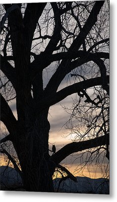 Owls Roost Metal Print by Eric Rundle