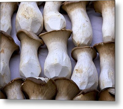 Oyster Mushrooms Metal Print by Colleen Williams