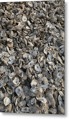 Oyster Shells After Processing Metal Print by Jim West