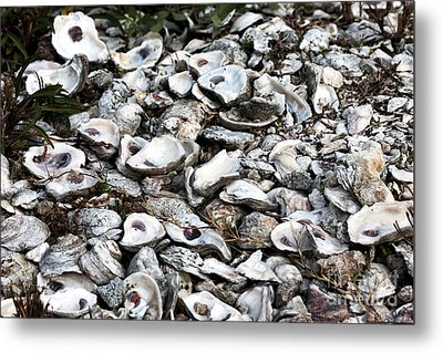 Oyster Shells Metal Print by John Rizzuto