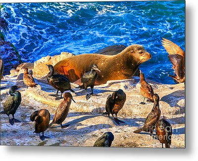 Metal Print featuring the photograph Pacific Harbor Seal by Jim Carrell