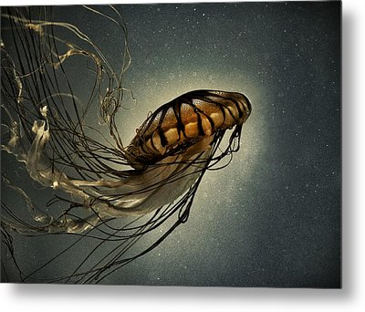 Pacific Sea Nettle Metal Print by Marianna Mills