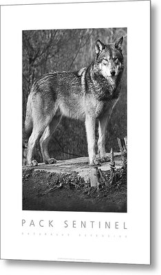 Pack Sentinel Naturally Defensive Poster Metal Print by David Davies
