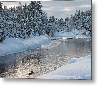Paddling Up The Snowy River Metal Print by Jacqi Elmslie