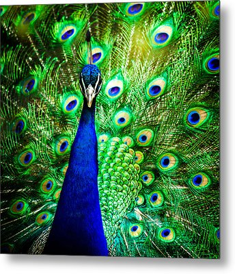 Pageantry Of Colors Metal Print by Daniel Chen