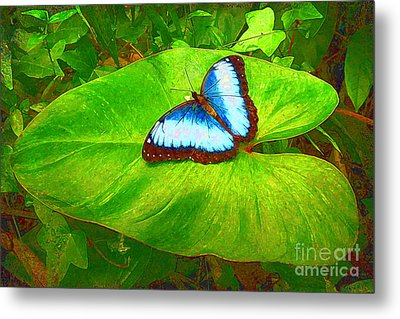 Painted Blue Morpho Metal Print