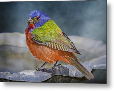 Painted Bunting In April Metal Print by Bonnie Barry