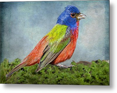Painted Bunting Portrait Metal Print by Bonnie Barry
