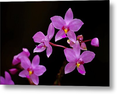 Metal Print featuring the photograph Painted Ground Orchids by Lorenzo Cassina