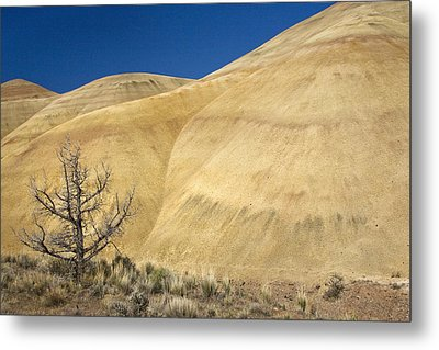 Metal Print featuring the photograph Painted Hills Tree by Sonya Lang