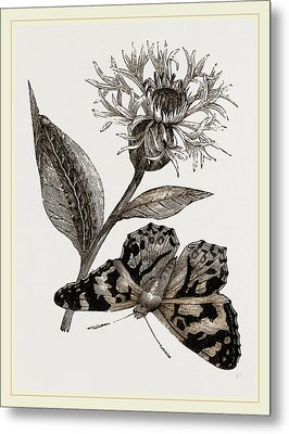 Painted Lady And Alpine Bluebottle Metal Print by Litz Collection