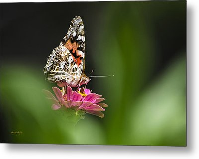 Metal Print featuring the photograph Painted Lady Butterfly At Rest by Christina Rollo