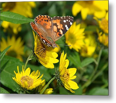 Metal Print featuring the photograph Painted Lady by James Peterson