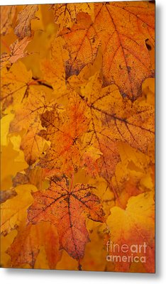 Painted Leaves Of Autumn Metal Print by Linda Shafer