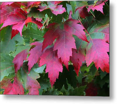 Painted Leaves Metal Print