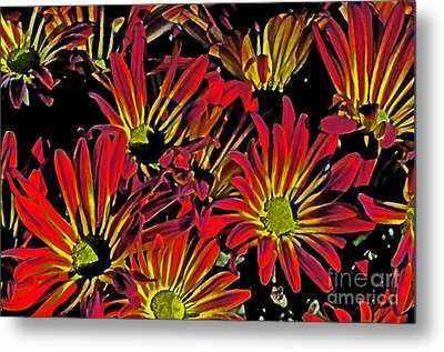 Metal Print featuring the photograph Painted Mums by Judy Wolinsky