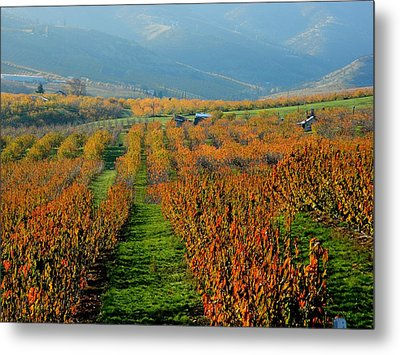 Painted Orchard Metal Print