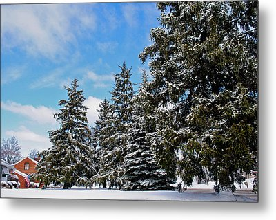 Painted Pines Metal Print by Frozen in Time Fine Art Photography