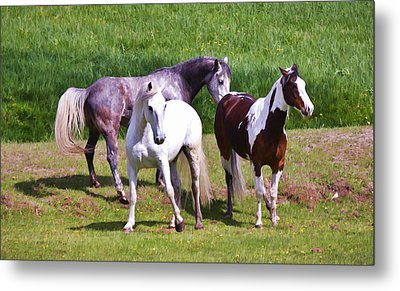 Painted Pretty Horses Metal Print by Athena Mckinzie