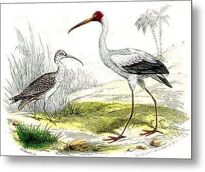 Painted Storks Metal Print by Collection Abecasis