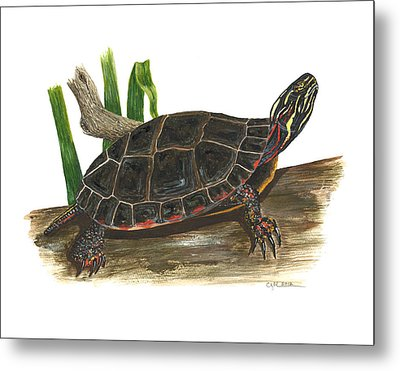 Painted Turtle Metal Print by Cindy Hitchcock