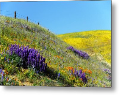 Painted With Wildflowers Metal Print