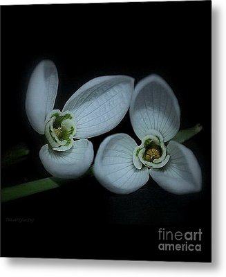 Metal Print featuring the photograph Spring  Is Coming by Marija Djedovic