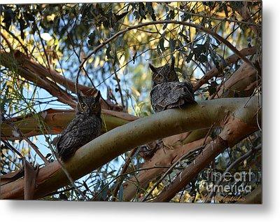 Pair Of Great Horned Owls Metal Print