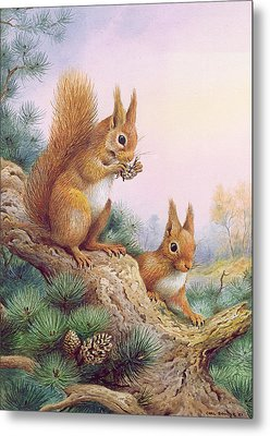 Pair Of Red Squirrels On A Scottish Pine Metal Print