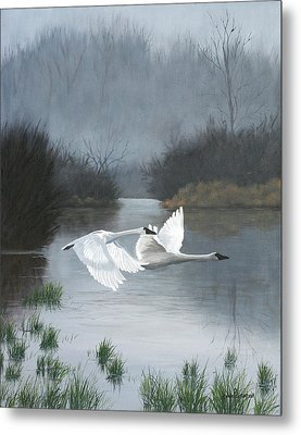 Pair Of Swans Metal Print by Julie Peterson