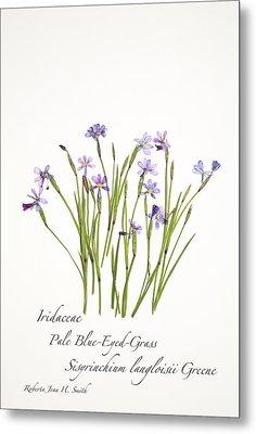 Pale Blue-eyed Grass Metal Print