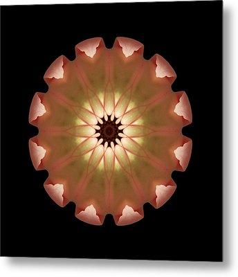 Pale Pink Tulip Flower Mandala Metal Print