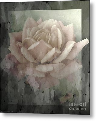 Pale Rose Photoart Metal Print by Debbie Portwood