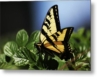 Metal Print featuring the photograph Pale Swallowtail by Richard Stephen