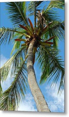 Palm And Sky Metal Print