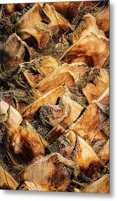 Palm Bark Metal Print