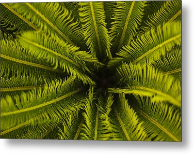 Metal Print featuring the photograph Palm Fronds by Amber Kresge