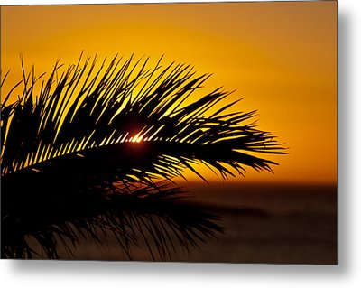 Palm Leaf In Sunset Metal Print