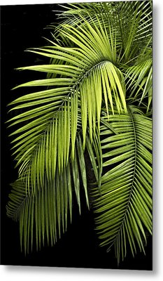Palm Leaves Metal Print by Judy  Johnson
