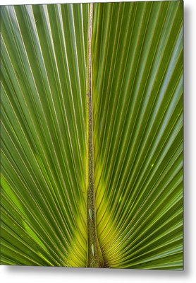 Palm Reader Metal Print
