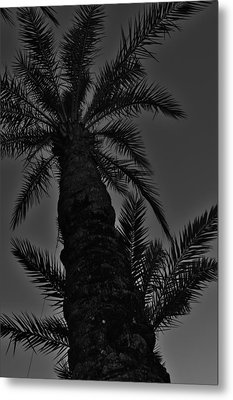 Palm Reader Metal Print by Tara Miller