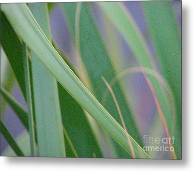 Metal Print featuring the photograph Palm Reeds by Val Miller