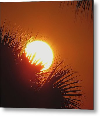 Metal Print featuring the photograph Palm Sunday by Nikki McInnes